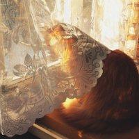 Поймал солнце :: Елена Федотова