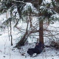 Тихо в лесу... :: Славомир Вилнис