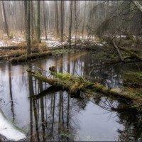 В заколдованном диком лесу :: Vladimir