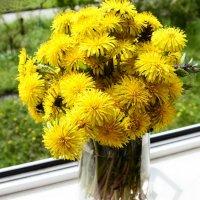 Одуванчиковая весна :: galina tihonova
