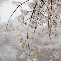 Морозным днём :: Михаил Тищенко