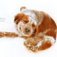 Опять это пёс:) :: Екатерина Лещенко