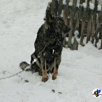 Зима :: Назар