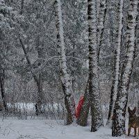Собачий холод :: Надежда Баликова