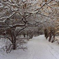Старый Старый Новый год (2014) :: Андрей Лукьянов