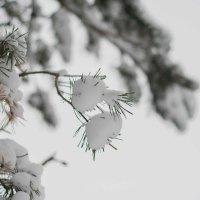 Снег :: Руслан Веселов