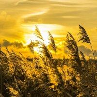 Зимние солнце :: Никита Лапин
