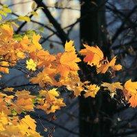 Желтые листья :: Андрей Николаевич Незнанов