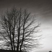 Дерево на берегу :: Андрий Майковский