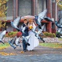 Любовь и голуби... :: Александр Мясников