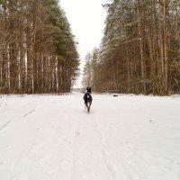 Грета на прогулке :: Мария Безушко