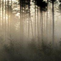 Утром туманным... :: Юрий Цыплятников