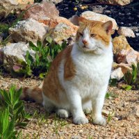 Кот, который гуляет сам по себе. :: Валерьян