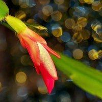 Зимние цветы. А за окном идут дожди... :: Александр Резуненко