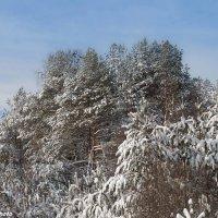 Мороз и солнце 2 :: Руслан Веселов
