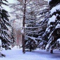 В зимнем парке тишина :: Татьяна Ломтева