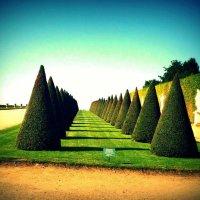 Версальский сад :: Екатерина Новгородцева