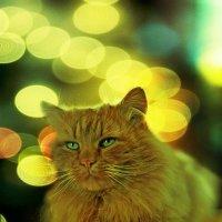 Загадка рыжего кота :: BoykoOD