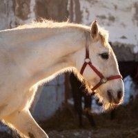 Морозным утром :: Андрей Нагайцев