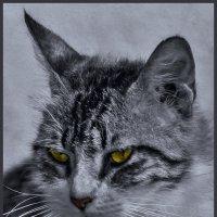 Усатый, волосатый,полосатый-из серии Кошки очарование мое! :: Shmual Hava Retro
