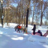 Февраль в парке :: Елена Семигина