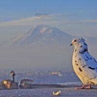 вид из Ереван гора Арарат :: Армен Абгарян