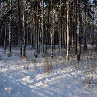 Зимнее. :: Leonid Volodko