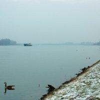 Январь на Рейне :: Boris Alabugin
