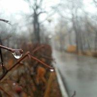 дождливое настроение :: Julya .