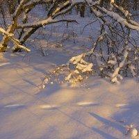 Ветка и снег :: Юрий Стародубцев
