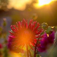 Август на закате... :: Наталия M