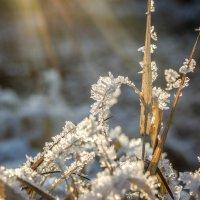 Снежинки :: Эльвира Билибина