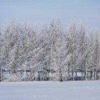Зимние зарисовки :: Николай В
