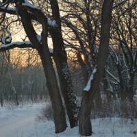 Зимний лесок :: Вероника Подрезова