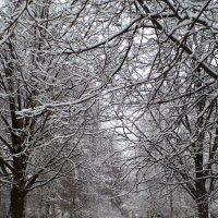 и к нам пришла зима... :: Марина Харченкова