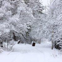 Зимняя дорога :: Денис Матвеев