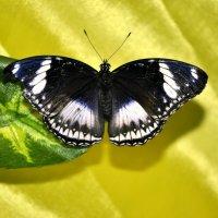 выставка бабочек. :: оксана рахова