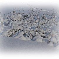 Мороз снежком укутал.... :: Tatiana Markova