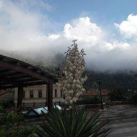 Белые цветы юкки :: Natalia Harries