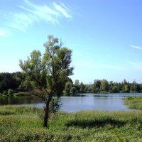 Берег озера :: Андрей Снегерёв