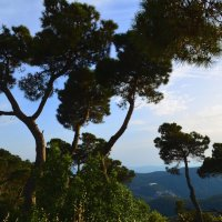 Природа Барселоны :: Таня Фиалка