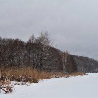 Прогулки по льду. :: Лена Минакова