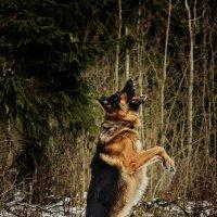 Собака вертикального взлета :: Владимир Самсонов