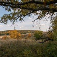 взгляд в осень :: Андрей ЕВСЕЕВ
