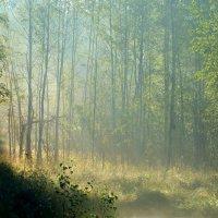 Туман и солнце :: Юрий Цыплятников