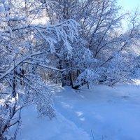 Зима :: Денис Матвеев