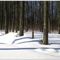 Тени на снегу... :: Тамара (st.tamara)