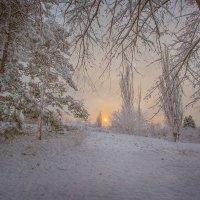 Зима в Краснодаре :: Tory Deeva