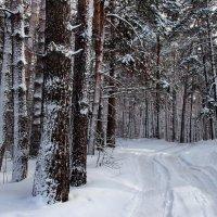 Лесов февральские дороги... :: Лесо-Вед (Баранов)