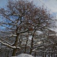 Графика зимы :: Наталья Джикидзе (Берёзина)